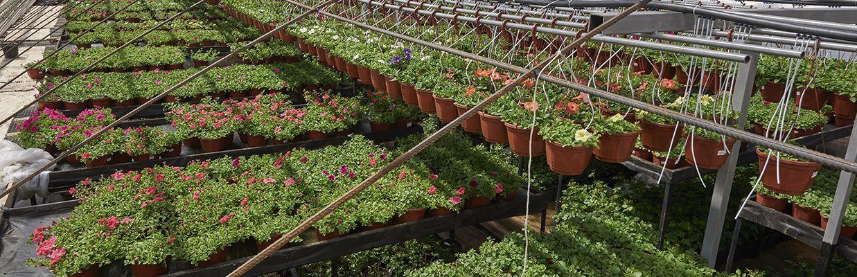 Дарвин садовый центр солнечногорск вакансии свежие частные объявления-мариуполь