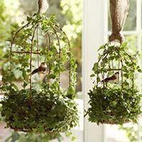 купить вьющееся комнатное растение