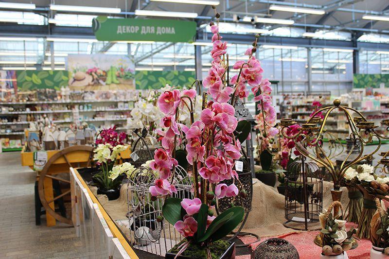 Магазин растений дарвин на симферопольском шоссе, для