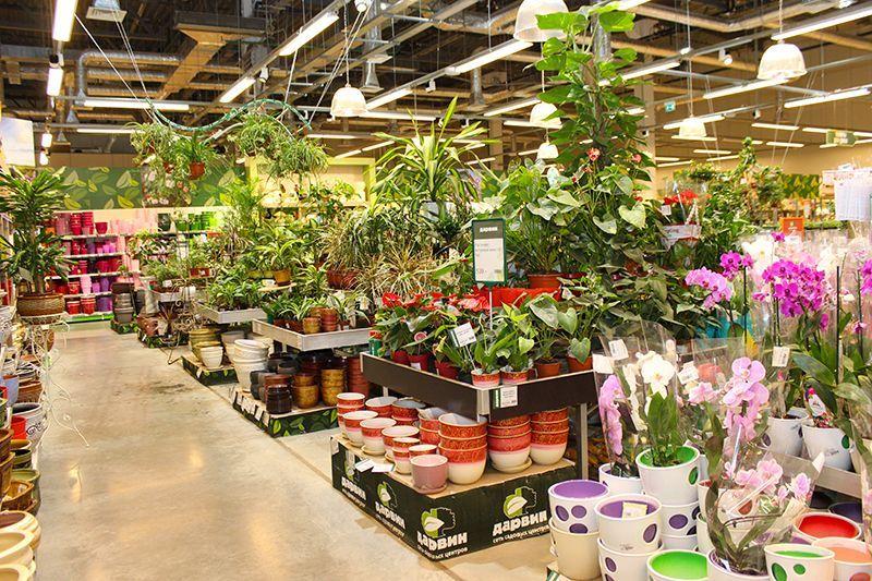 Магазин растений дарвин на симферопольском шоссе, цветы свадебный