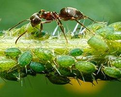 купить инсектициды от вредителей